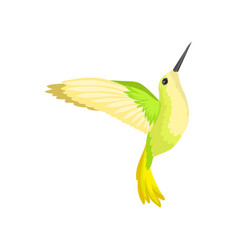 flat icon of beautiful colibri with bright vector image