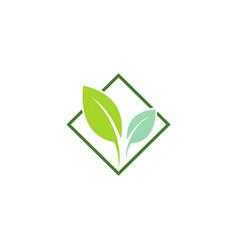 green leaf organic logo vector image