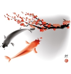 Koi carps and sacura branch vector
