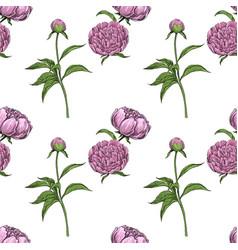 peonies seamless pattern vector image