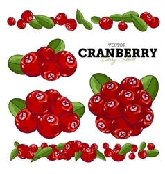 Cranberry Set vector
