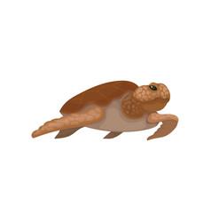 sea turtle reptile animal on a vector image