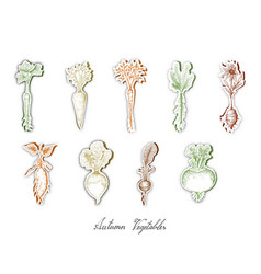 Set of autumn root vegetables with paper cut art vector