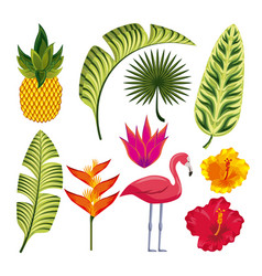 tropical flower design vector image