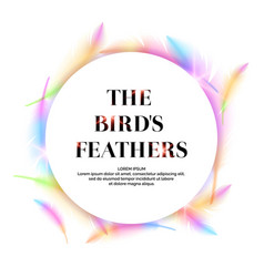 Bright bird feathers on a white background vector
