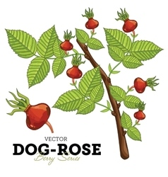 Dog-Rose Set vector image