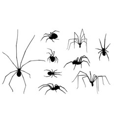 Set of spiders vector