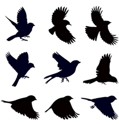 silhouettes birds vector image