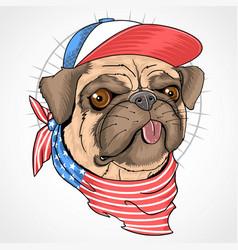 usa flag dog vector image