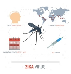 Zika virus infographic - facts vector