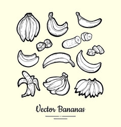 Bananas isolated fruits collection hand vector