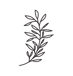 branch with leaf isolated icon vector image