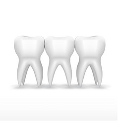 clear three white teeth with shadow vector image