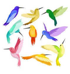 Flat set hummingbirds with colorful vector