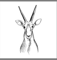 hand drawn head antelope vector image