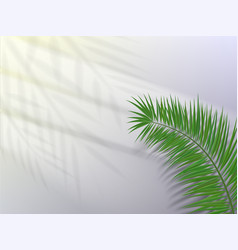 palm leaf with shadow on light background vector image