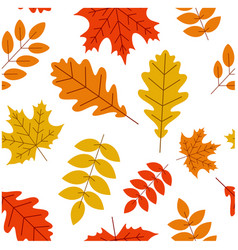 white autumn background with colorful leaves vector image