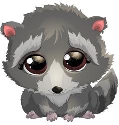 beautiful gray raccoon vector image