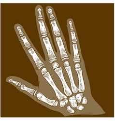 Engraving hand bone x-ray vector