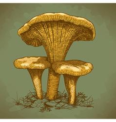 engraving three mushrooms retro vector image