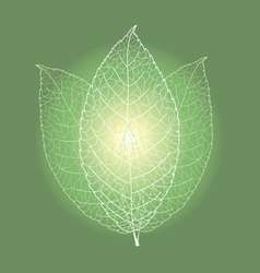 Leaves ecology vector