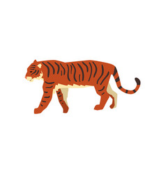 majestic tiger side view wild cat predator vector image