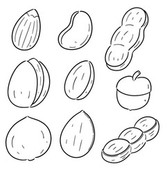 set of beans and nuts vector image