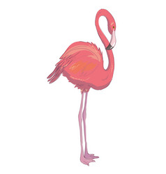 pink flamingo exotic bird cool flamingo vector image vector image
