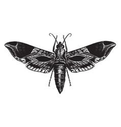 satellite sphinx moth vintage vector image