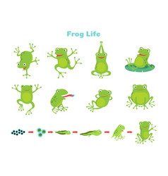 Cartoon frog cute green frogs isolated wild vector