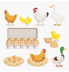 Chicken duck chick egg packaging and the nests vector image
