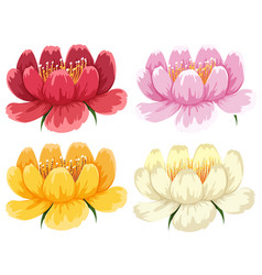 Four colors of the same type of flower vector