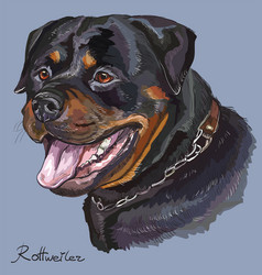 Rottweiler colorful hand drawing portrait vector