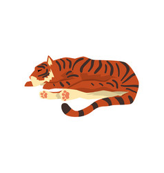 Tiger sleeping on floor wild cat predator vector
