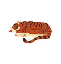 Tiger sleeping on the floor wild cat predator vector