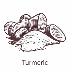 turmeric root icon botanical sketch for labels vector image