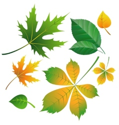set of leaves on white vector image vector image