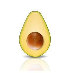 3d realistic cut half avocado closeup vector