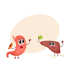 cute and funny smiling human stomach and liver vector image