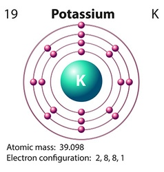 Diagram representation of the element potassium vector image vector image