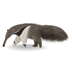 cute anteater isolated on white background vector image