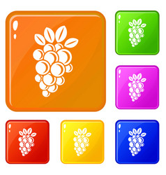 Isabella grape icons set color vector