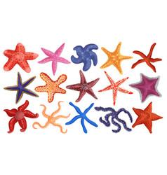 Sea starfish cartoon set icon vector