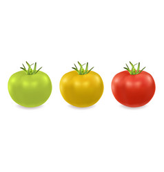 3d realistic green yellow and red tomato vector