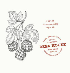 beer hop hand drawn botanical engraved style vector image
