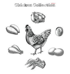 Chicken collection hand draw vintage engraving vector