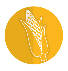 corn cob isolated icon vector image