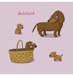 Set of cute dachshund in different vector image