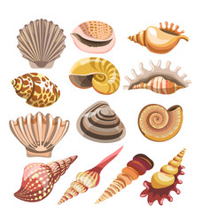 shells or seashells isolated icons vector image