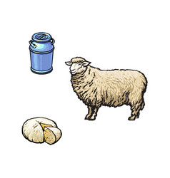 sketch sheep milk can cheese set isolated vector image